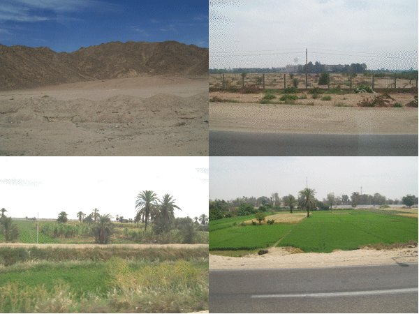 arid and green